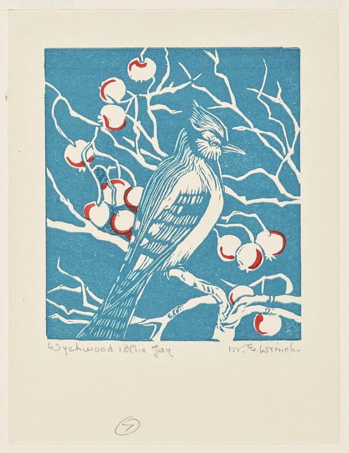 Wychwood Blue Jay