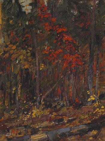 The Little Maple, Algonquin Park